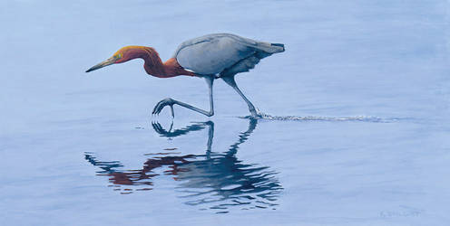 Reddish Egret by xfkirsten