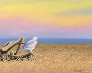 Sunset Snowy Owl by xfkirsten