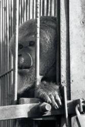 lonely monkey 2