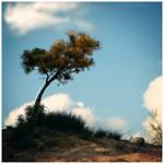 tree.let 2
