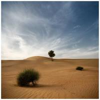 Desert Poetry I by fr-ae-nk
