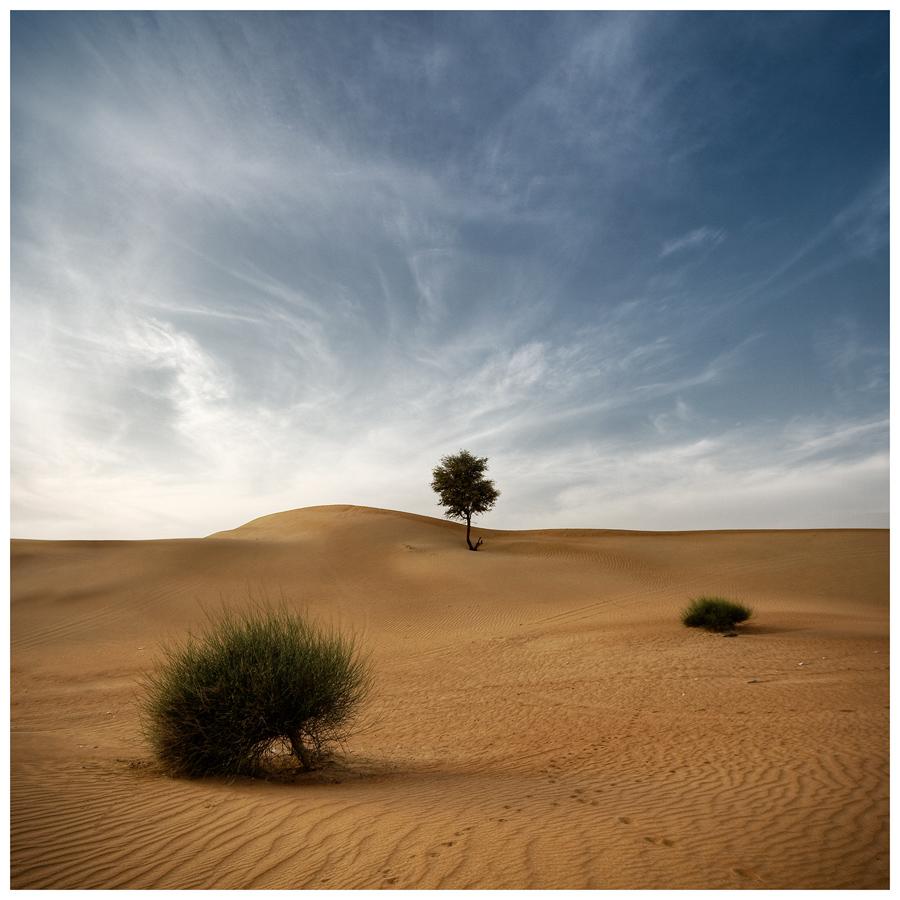 Desert Poetry I