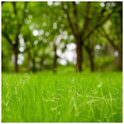 Green Bokeh Spring 2019