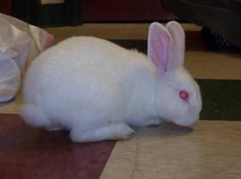 Rabbit 07 by Tilt-Stock