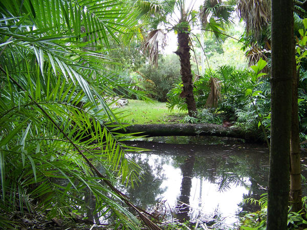 Sarasota Jungle Gardens 3 By Tilt Stock On Deviantart