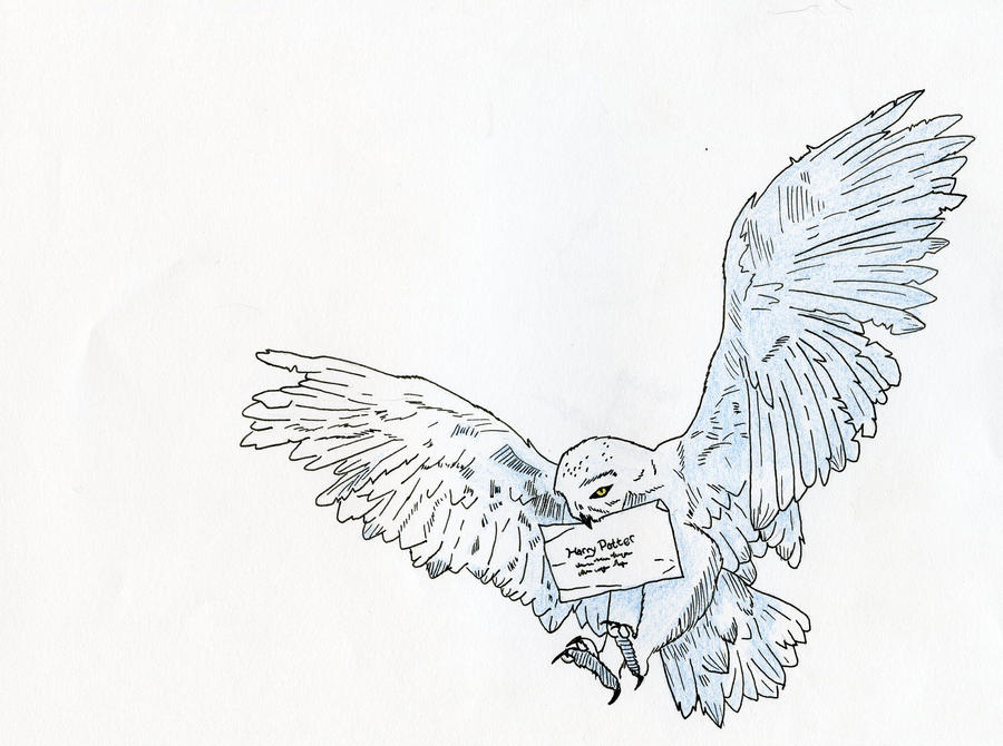 Hedwig By Kalizin On DeviantArt