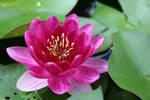 Lotus 3 by zymcka