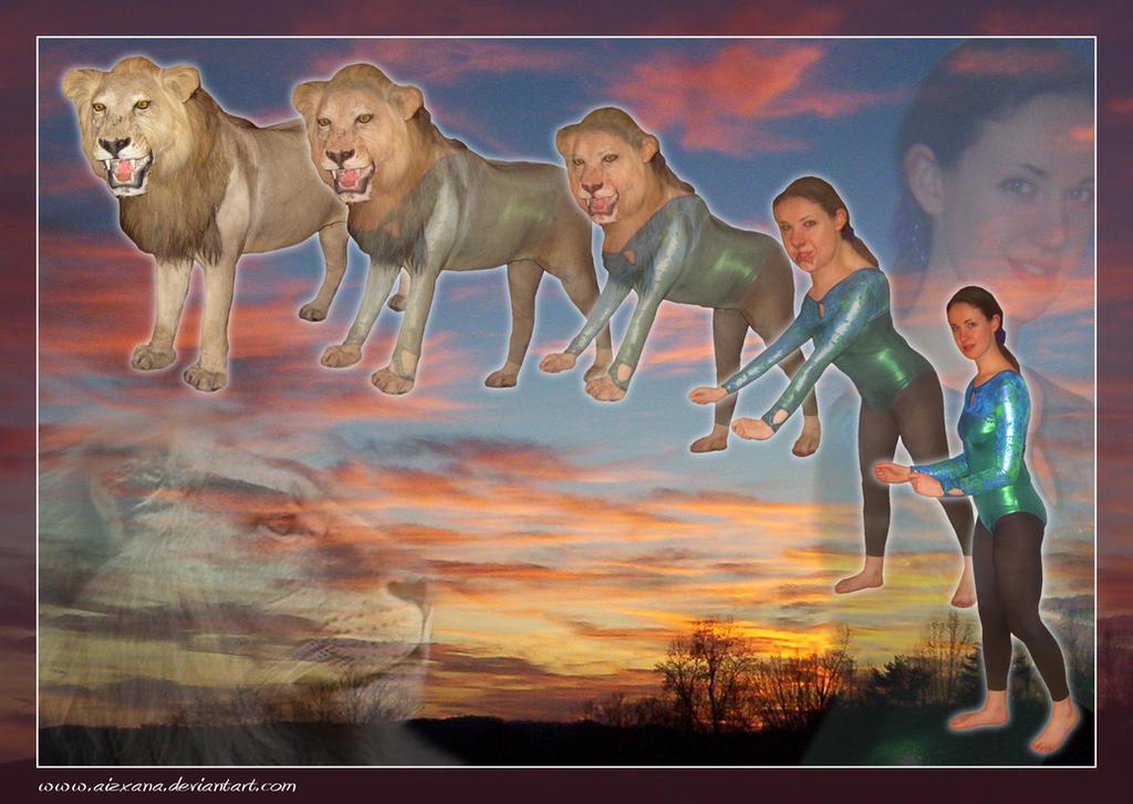 lion lioness wallpaper