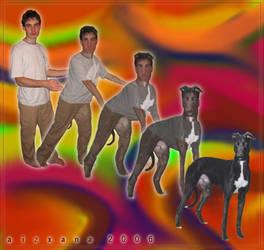 Greyhound Morph by Aizxana