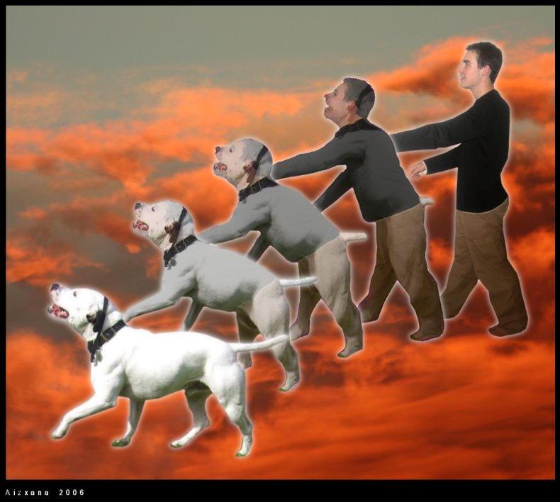 Animal Transformation Photomanipulation Dog morph viii by aizxana