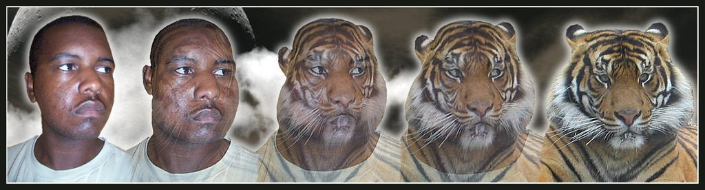 tiger_morph____cubfan86_by_aizxana