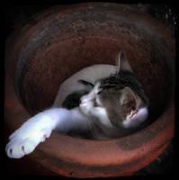 Kitten in a jar by DarkBorder