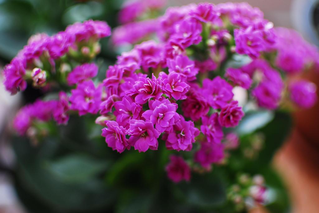 even men can help flowers grow... by saltu