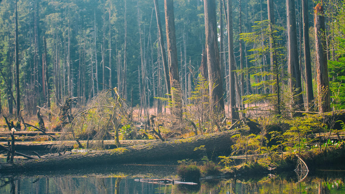 Belcarra Swamp 2 by RaphaelTM