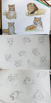 Big Cat Sketches