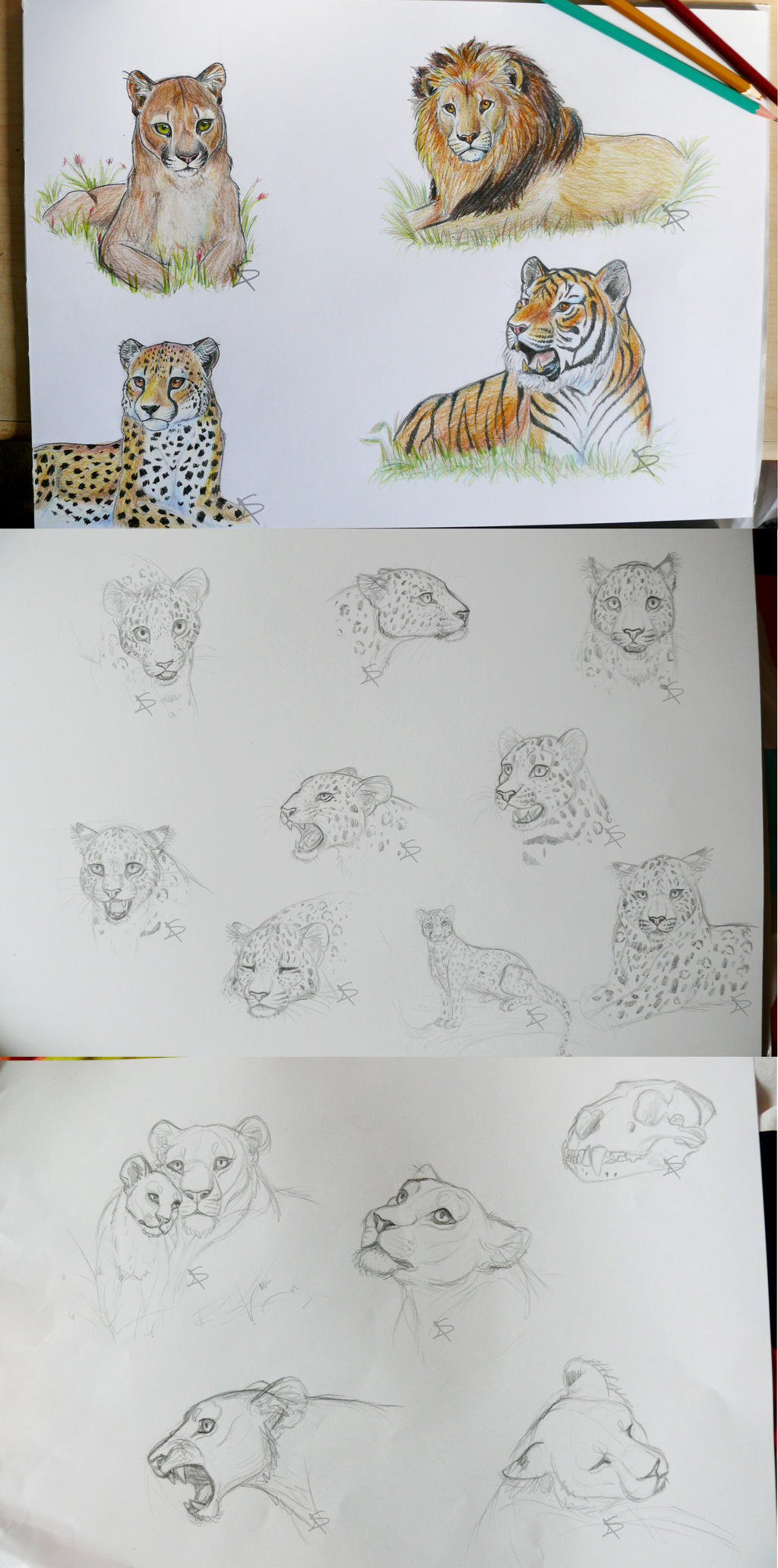 Big Cat Sketches by Miosita
