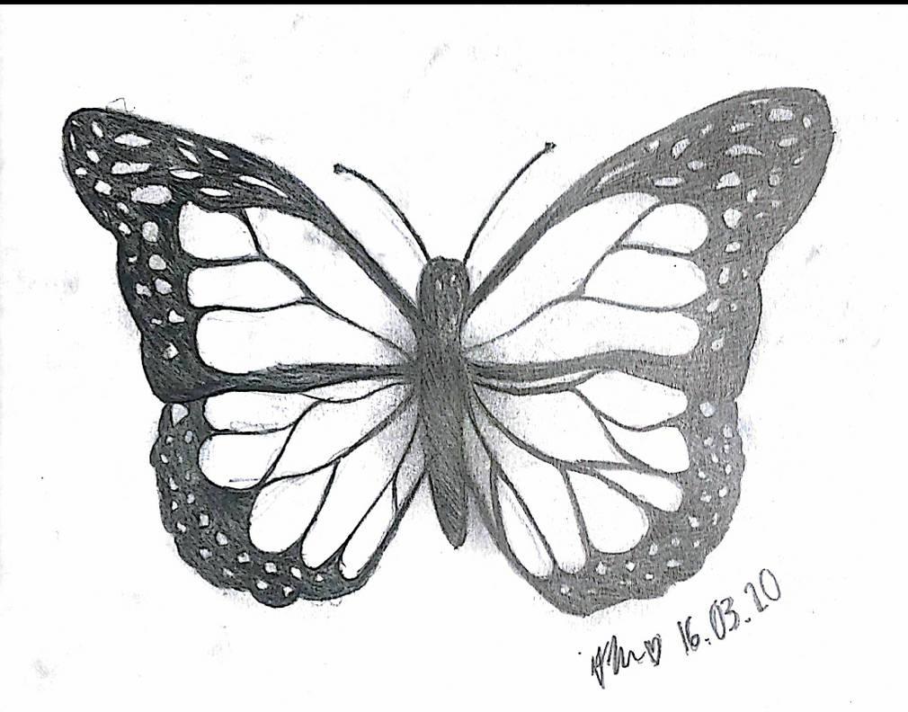Butterfly sketch oo by snowyowl119