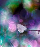 Colorsfly by Deeevilish