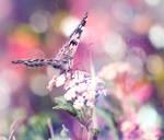 Fairies, by Deeevilish