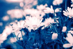blue field by Deeevilish