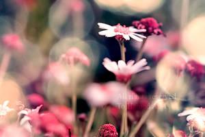 Love of may ll by Deeevilish