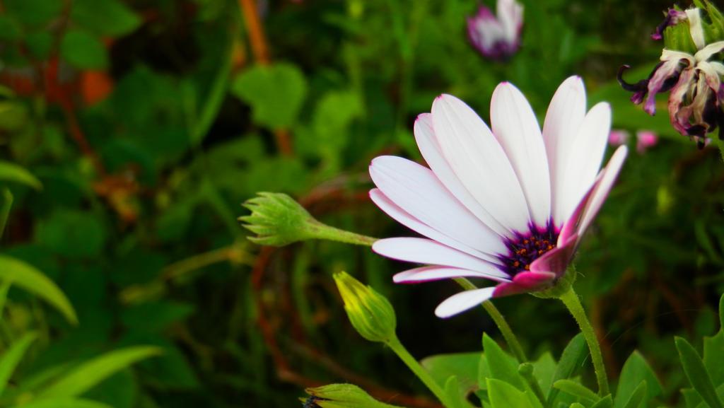 Flower by Symboler