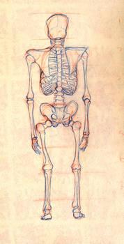 Skeleton Study - Back