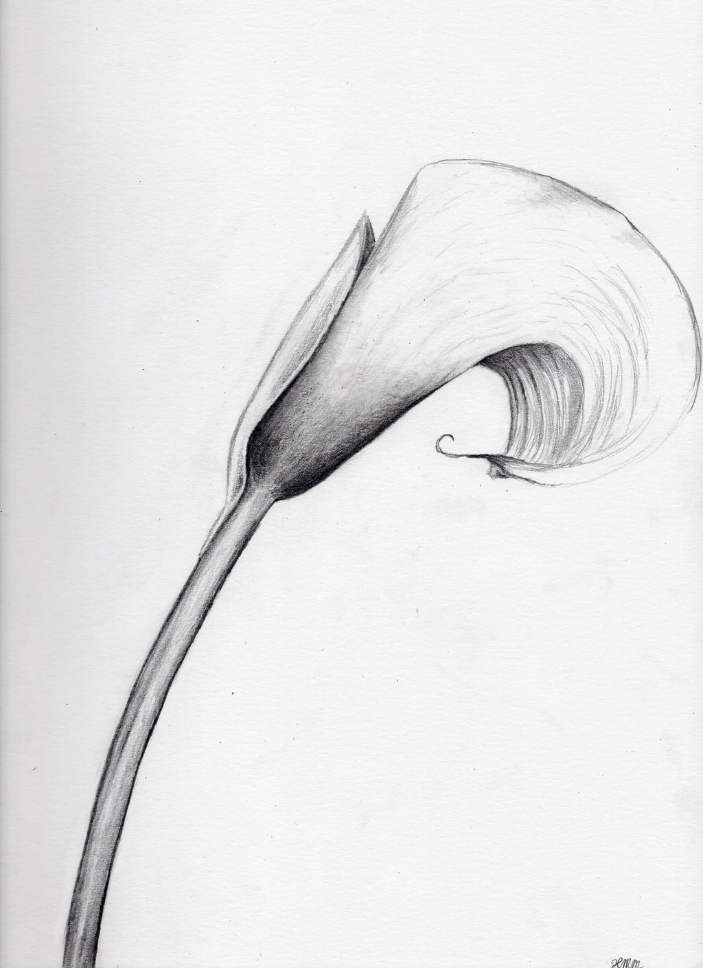 Calla Lily Drawing Calla lily by o0starrieskye0oCalla Lily Flower Drawings