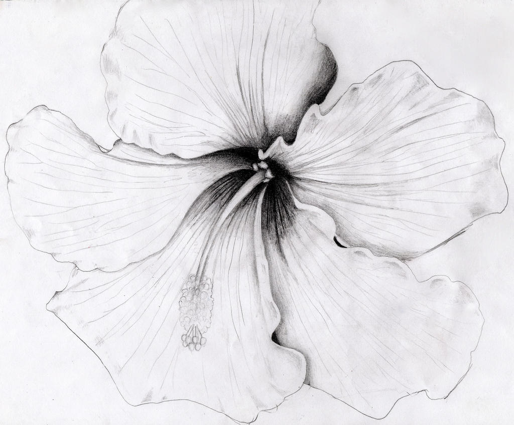 Hibiscus by o0starrieskye0o on deviantart for Hibiscus flower tattoo sketches