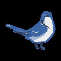 Blue Jay - Little bird 6/6