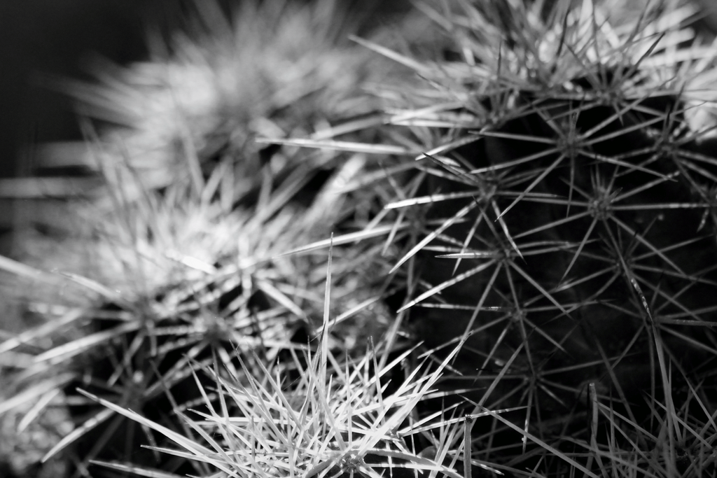 Spines by DBoydPhotography