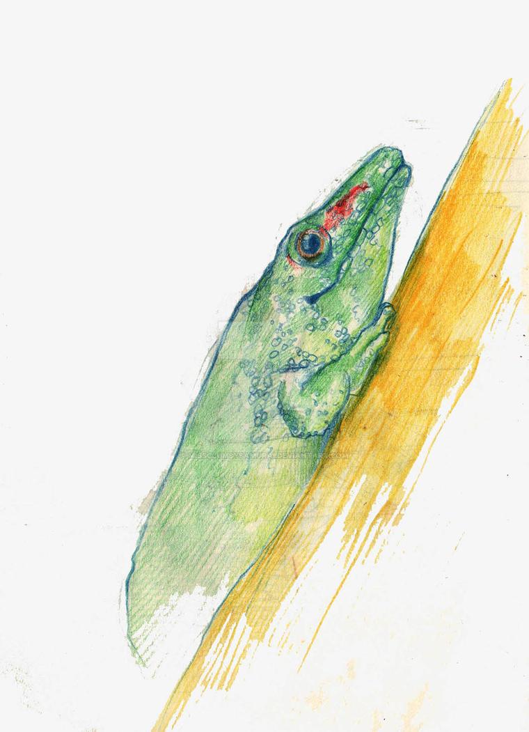 Lizard by missclumsysamurai