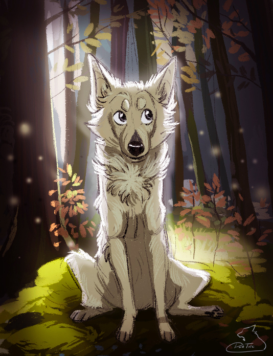 The forest lights by Darkpaw2001