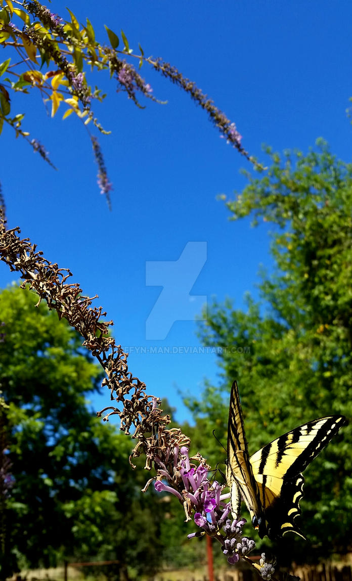 Late Morning Monarch by Muffyn-Man