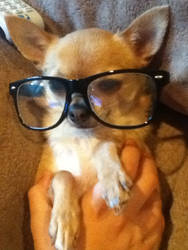 My Cute Little Doggie With Glasses by tallestlizz3421