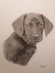 Puppy drawn in pencil and charcoal