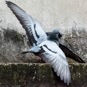 Wings of love. by DebasishPhotos