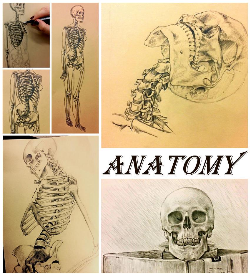 bones study by kirakam