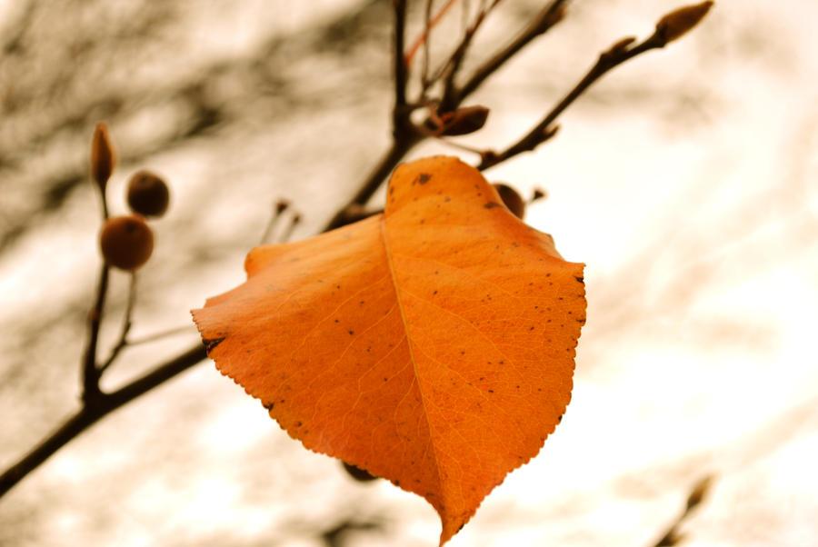 Leaf 2 by JTHM5000