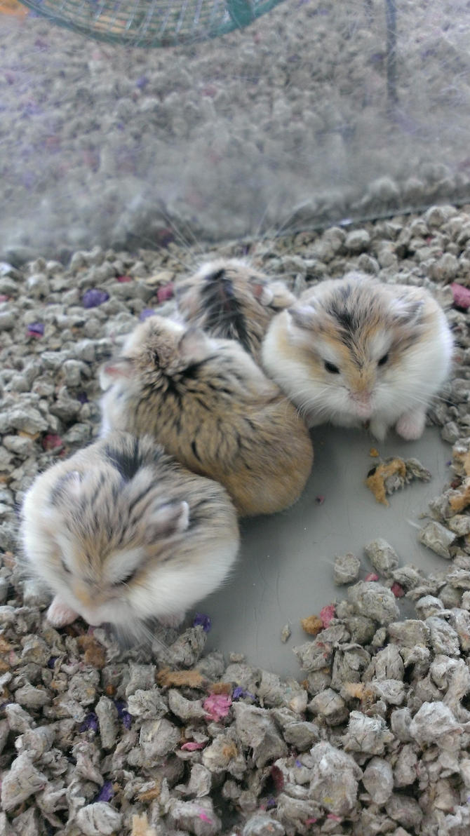 Baby Hamsters by Isaiah2696