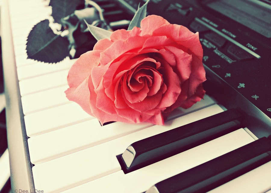 simple melody flower rose white bigthumbnail pale pink rose pianopPiano With Rose Photography