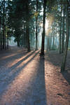 Forest light II