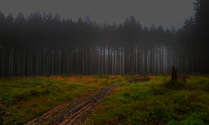 dark forest with meadow
