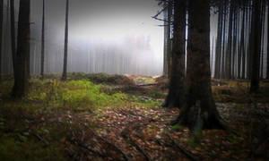 dark forest I