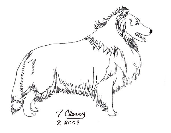 sheep dog coloring pages - photo#29