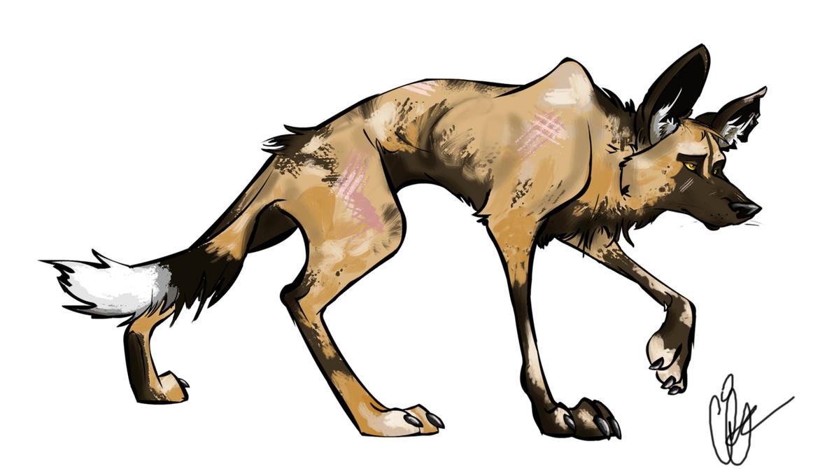 African wild dog drawing photo1