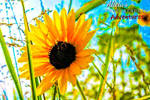 Sunflower by AliciaPhotoAdventure