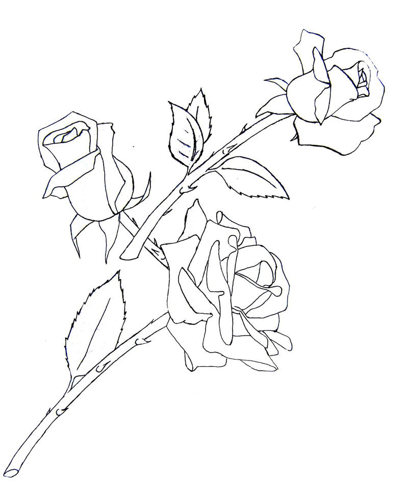 Rose Line Drawing Tattoo : Rose tattoo draft by ladysiubhan on deviantart