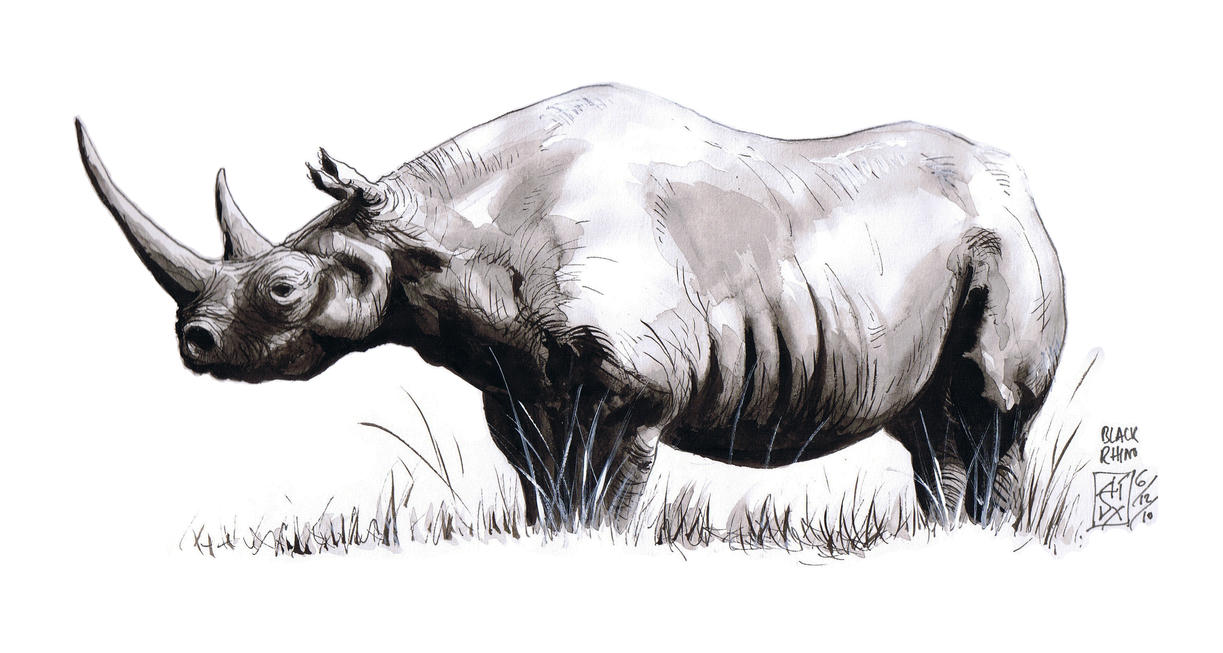 Black Rhino by avix on DeviantArt