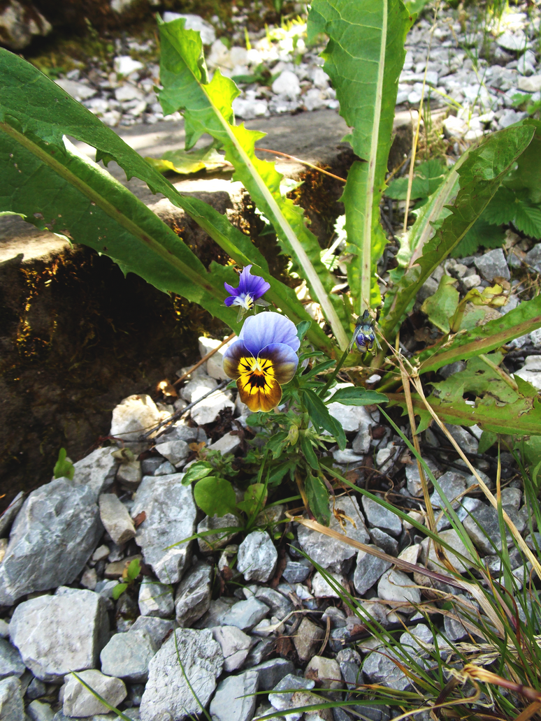 Flowers in Tannheimer Tal by CannibalBlowjob